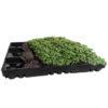 Vegetační zelená střecha - ECOSEDUM PACK