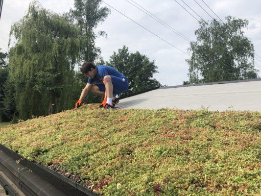 instalace zelené střechy ECOSEDUM PACK