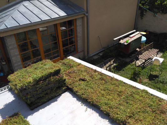 Zelená střecha ECOSEDUM PACK