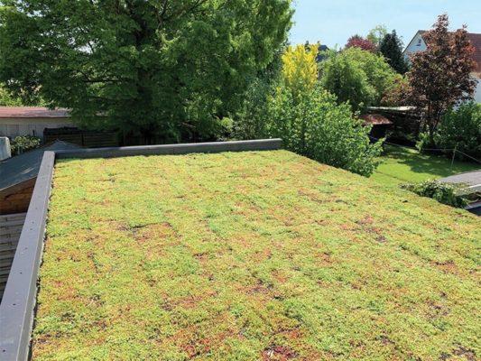 Skladba zelené střechy
