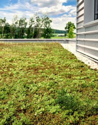 Cena zelené střechy